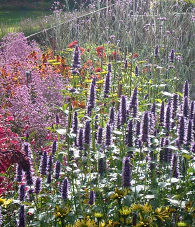 long-late-summer-herbaceous-border-openday